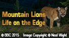 Mountain Lions Life on the Edge (ENG/CHI)