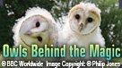 Owls Behind the Magic (ENG/CHI)