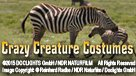 Crazy Creature Costumes (ENG/CHI)